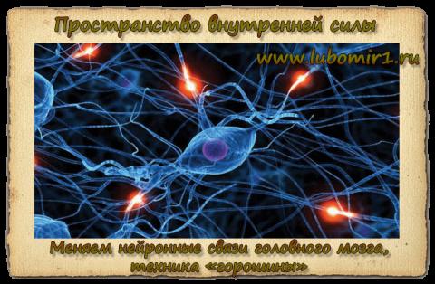 Меняем нейронные связи головного мозга