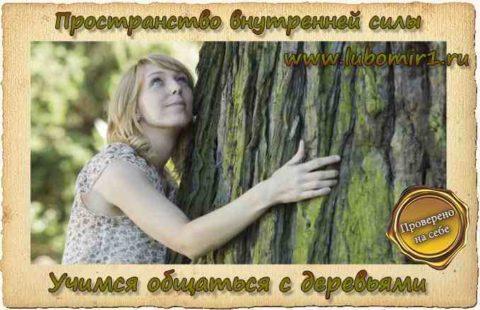 Учимся общаться с деревьями