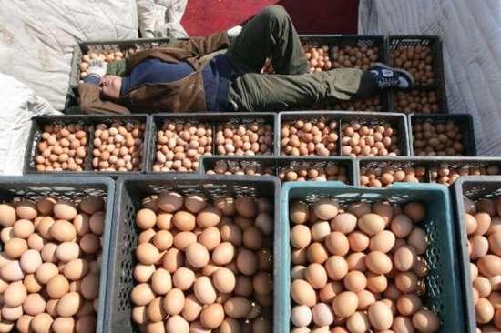 Яйца из Китая