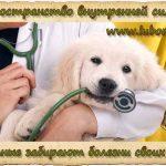 Животные забирают болезни своих хозяев